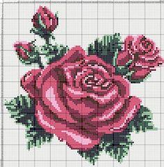 Картинки по запросу розы крючк