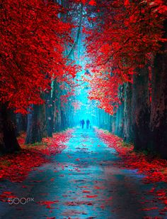 Fairytale Pathway Photography by Mevludin Sejmenovic is part of Beautiful photography nature - Zebra Art provides the information about the art world News about painting, photography, illustration, exhibition, sculpture and installation art Vintage Nature Photography, Beautiful Landscape Photography, Autumn Photography, Beautiful Landscapes, Travel Photography, Beautiful Nature Wallpaper, Nature Pictures, Amazing Nature, Belle Photo