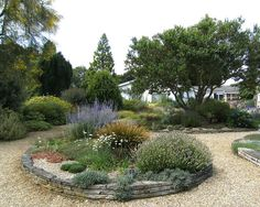Gravel garden & a view to the house - The Beth Chatto Gardens