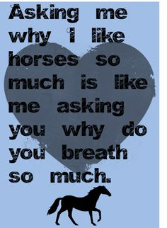 Horses - Horses Funny - Funny Horse Meme - - Horses Horses Funny Funny Horse Meme A guy in my class asked me that the other day That was my response. The post Horses appeared first on Gag Dad. The post Horses appeared first on Gag Dad. Funny Horses, Cute Horses, Pretty Horses, Beautiful Horses, Beautiful Cats, My Horse, Horse Love, Horse Girl, Barrel Racing Quotes