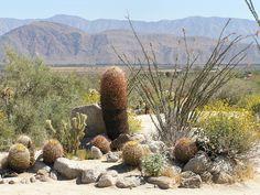 ... Image: Anza-Borrego Desert State Park ...