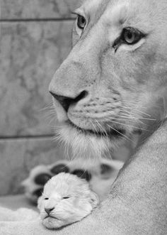 I love animals soooooo much lokat that tender face