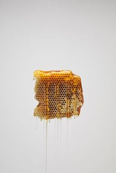 Food Nourriture 食べ物 еда Comida Cibo Art Photography Still Life Colors Textures Design Honey Cereal Magazine, Save The Bees, Bee Keeping, Mellow Yellow, Food Design, Design Art, Food Styling, Food Art, Food Photography
