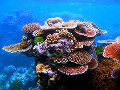 This is the planet's largest coral reef system and it can be seen as far away as outer space! The gorgeous Great Barrier Reef is off the coast of Australia, in the Coral Sea, and stretches fo… Great Barrier Reef, Papua Nova Guiné, Coral Bleaching, Fauna, Ocean Life, Marine Life, World Heritage Sites, Sea Creatures, Under The Sea