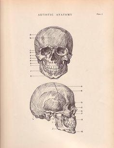 Human Skull Anatomy Print 9 x 12 Drawing Vintage 1941 by AgedPage, $11.00 #agedpage