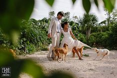 50 Award Winning Wedding Photography By Fearless Photographers