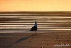 New Zealand, Gisborne, Seagull by Emanuele Del Bufalo