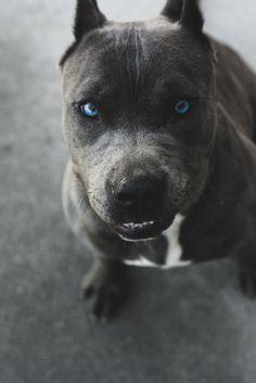 Blue Pit