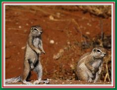 bbc9b2155185e7bf9cfadc0edb0a1fd5 - How To Get Rid Of Squirrels In My Ceiling