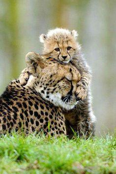 Cheetah Love.