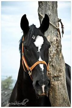 So like my beautiful mare....takes my breath away, and brings back the memories.... :-/