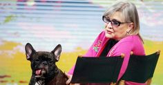 Carrie Fisher's French bulldog, Gary Fisher, has become an Internet sensation during the Stars Wars: The Force Awakens press tour — see the cute pics! Carrie Frances Fisher, Gary Fisher, Latest Celebrity Gossip, Han And Leia, Debbie Reynolds, Press Tour, Star Wars Clone Wars, Indiana Jones, New Tricks