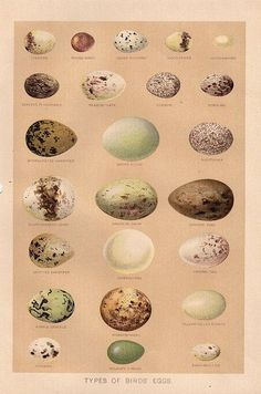 Free Graphic: Beautiful Bird Eggs - The Graphics Fairy