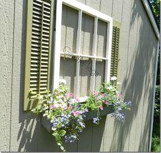 Window shutters vintage