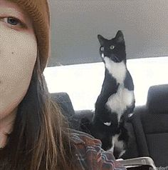 Funny cats - part 255 (40 pics + 10 gifs)