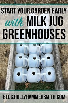 Milk Jug Greenhouses - Start your garden early with milk jug greenhouses. These mini greenhouses are easy to make and give seedlings a jump start on the growing season. #gardening #organicgardening #gardentips #seedsowing