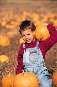 Preschool Pumpkins Theme