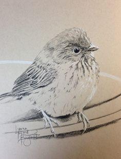April: 30 drawings in 30 days.  04/01/2015 www.lynnehurdbryant.com available Pencil Sketch Drawing, Bird Sketch, Pencil Art Drawings, Art Drawings Sketches, Bird Drawings, Animal Drawings, Watercolor Animals, Watercolor Art, Graphite Art