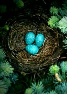 Turquoise robins eggs