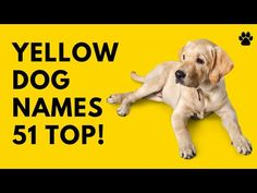 🐕 Yellow Dog Names - 51 BEST ✨ CUTE ✨ TOP Ideas | Names Unique Female Dog Names, Best Dog Names, Cute Girl Puppy Names, Cute Names, Best Apartment Dogs, Best Dogs For Families, Group Of Dogs, Dog Books, Best Dog Breeds