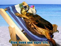 Turtle - Slow Down And Enjoy Life, with Pina Colada on the Beach. Also available with beer. Tortoises, Slow Down, Pina Colada, Mens Tees, Turtle, Beer, Life, Design, Root Beer