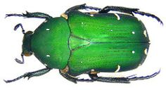 Beetle A Bug's Life, Beetle, Bugs, Creatures, Butterfly, Colours, Pictures, Rey, Animals