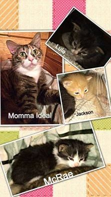 Please help! Wishlist Needs! A mother cat w/ newborns can't wait for pledges to be raised - Momma Ideal & her newborns were pulled when she was abandoned @ Butts Cty Ac -no matter how rescue friendly, a steel cage at any county pound is no place to raise a happy healthy family. Now 3 weeks old, Lula, Jackson & McRae are thriving! Mother & kitten items on our wishlist are urgently needed as we also have more than a dozen orphans already in our rescue with more coming in-please consider ...