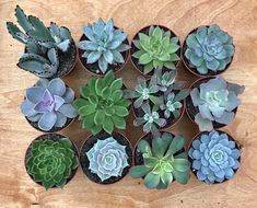 *Free Shipping* Assorted Large Succulents (4) - Live Succulent Plants (6/12/18/24) All plants shipped BARE-ROOT (no pot or soil) via USPS Priority Mail. Message us if you prefer to have plants shipped with pot and soil (additional shipping charges will be applied). Let us know