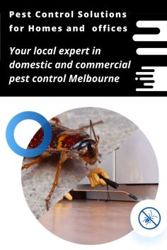 Squeak Pest Control is your local expert in domestic and commercial pest control in Melbourne. We provide the best solutions from our experts. Our pest control services at an affordable price. #pestcontrolservice #pestmanagement #pestcontrollife #Melbourne