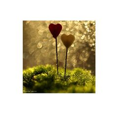 Valentine Hearts In Moss.