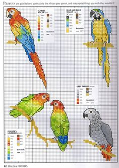 Borduurpatroon Papegaai - Parkiet *Cross Stitch Pattern Parrot- Macaw