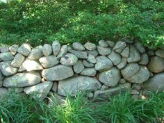 Stone wall Polly Hill Arboreteum