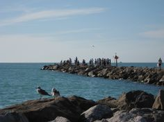 South Jetty, Venice Florida Great place to see dolphins spent a lot of time here