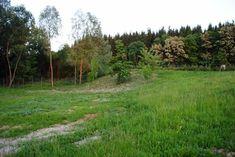 Country Roads, Plants, Planters, Plant, Planting