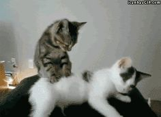 funny-gif-cat-massage