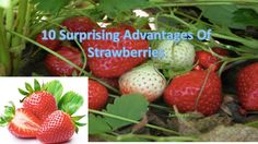 10 Surprising Advantages Of Strawberries