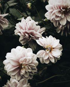 fresh flowers.