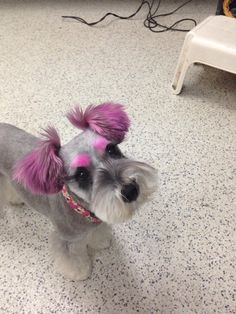 -Repinned- More creative dog grooming.