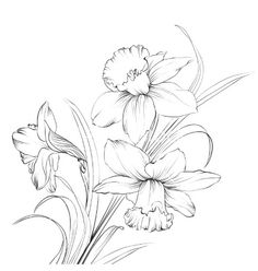 Daffodil flower or narcissus isolated on white. - Buy this vector image without royalty and search similar works on the Adobe Stock website - Daffodil flower or narcissus isolated on white. – Buy this vector image without royalty and searc - Narcissus Flower Tattoos, Daffodil Tattoo, Birth Flower Tattoos, Flower Line Drawings, Flower Sketches, Art Floral, Tattoo Drawings, Art Drawings, Logo Fleur