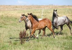 Should My Horse Be Barefoot or Shod? It Depends | Horse Journals