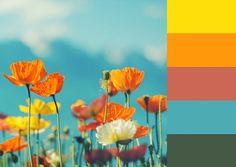 Poppies color palette