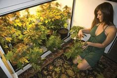 Buy marijuana seeds online from Crop king Seeds. Premium quality cannabis seeds at affordable prices. Choose from the best quality autoflowering, feminized, and regular cannabis seeds with quick and discreet delivery worldwide. Weed Girls, 420 Girls, Vape Girls, Growing Weed, Cannabis Growing, Seeds Online, Nature, Men Stuff, Ganja