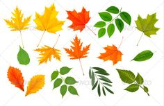 Big Collection of Colorful Leaves