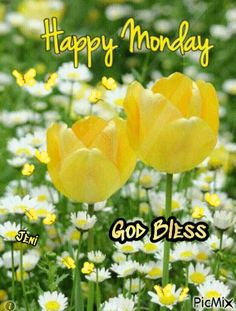 Happy Monday Gif, Good Morning Monday Gif, Monday Night, Good Morning Quotes, Monday Images, Good Morning Animation, Monday Blessings, Funny Attitude Quotes, Night Quotes