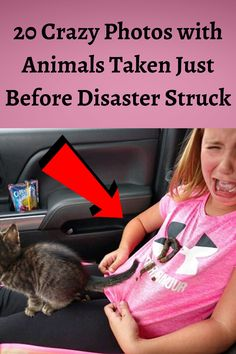 20 Crazy Photos with Animals Taken Just Before Disaster Struck Bridal Hair Updo, Elegant Wedding Hair, Strange Photos, Viral Trend, Quotes Indonesia, Natural Makeup Looks, Haha, Boy Hairstyles, Funny Pins