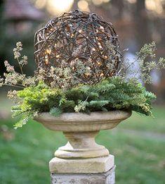 grapevine ball on evergreen