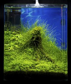 https://flic.kr/p/9fCBwz | Nano 8 | Nano contestants at the Art of the Planted Aquarium, Hannover 2011
