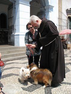 Relativamente as fezes do seu cão pegue num saco e retire-as sempre. Se está num parque público  ou num passeio, não se esqueça que crianças e pessoas passam por ali e podem pisar ou apanhar doenças