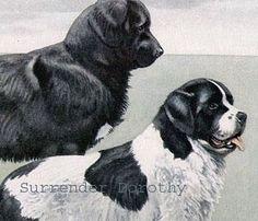 Newfoundland Dogs Louis Agassiz Fuertes 1910 Original Edwardian Antique Lithograph