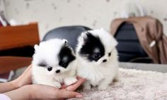 Cute Puppy – Check out these Great Amazon Cyber Monday Deals http://www.pindoggy.com/pin/9630/